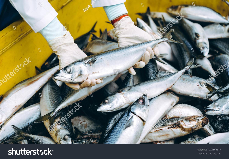 Fish Seafood Factory Stock Photo (Edit ...