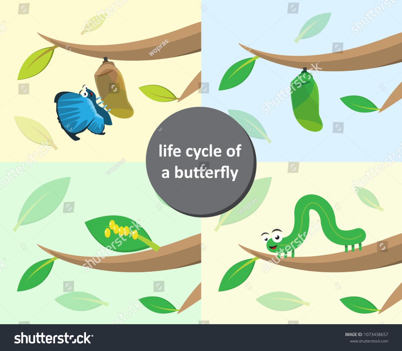 Metamorphosis Butterfly Eggs Caterpillar Pupa Butterfly Stock