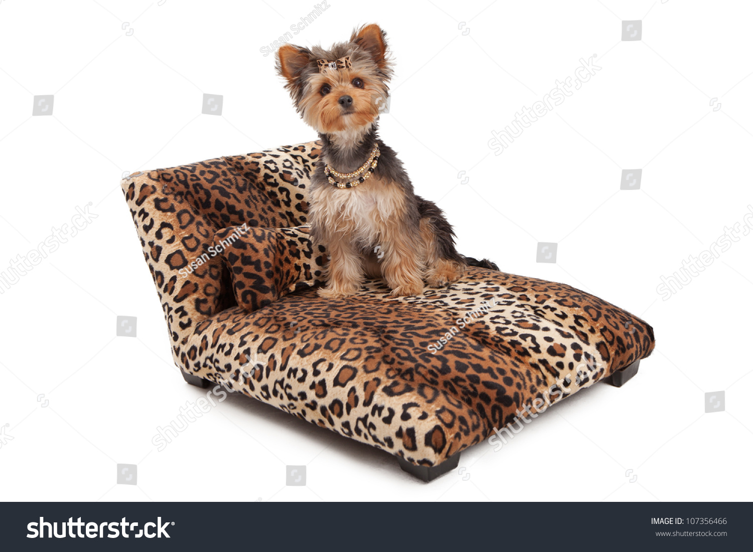 A Cute Yorkshire Terrier Dog Wearing A Necklace And Bow That Is Sitting A Designer Leopard