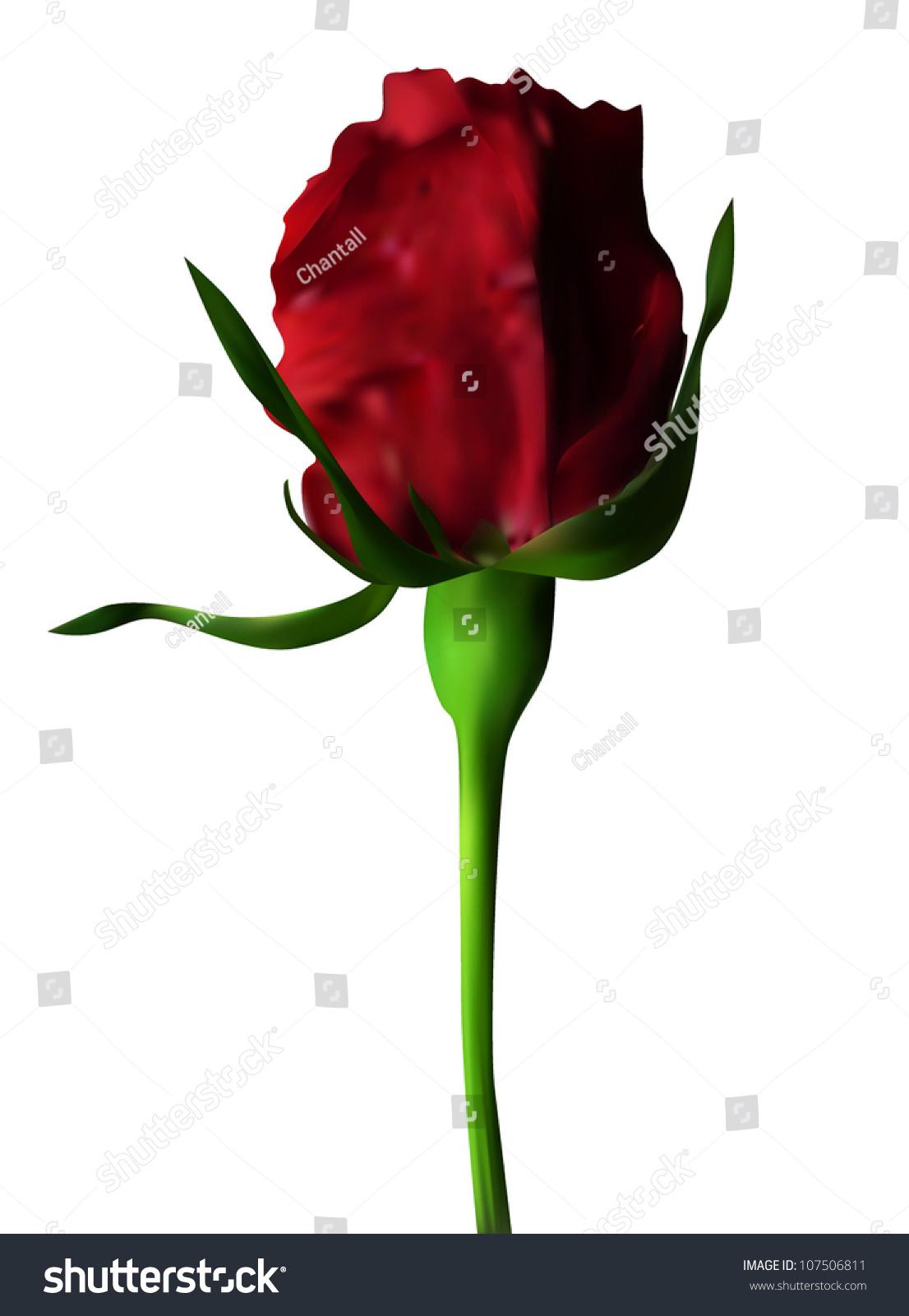 Elegant red rose symbol love your stock vector 107506811 elegant red rose symbol of love for your design buycottarizona