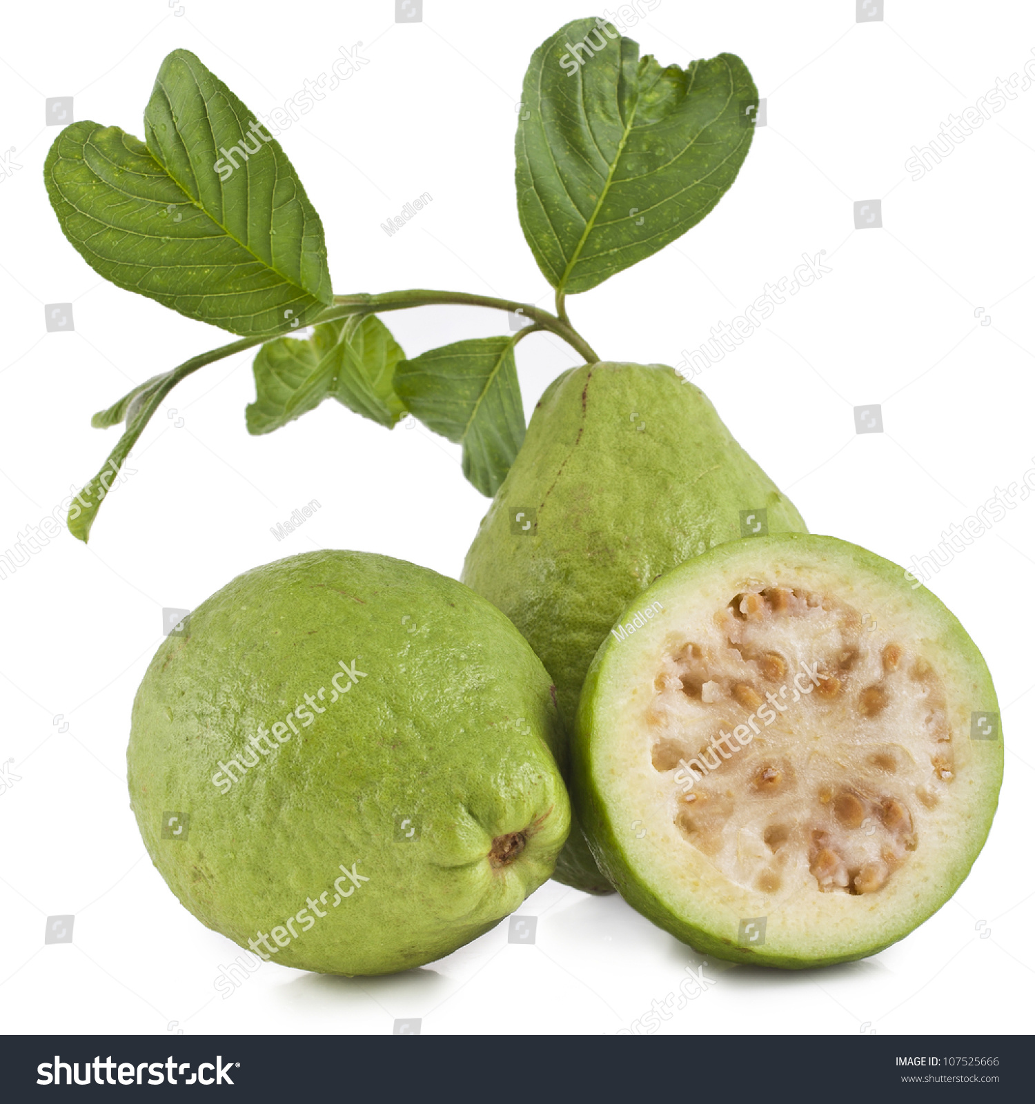 Fresh Guava Fruit With Leaves On White Background Fresh Guava Fruit Leaves  On White Stock Photo