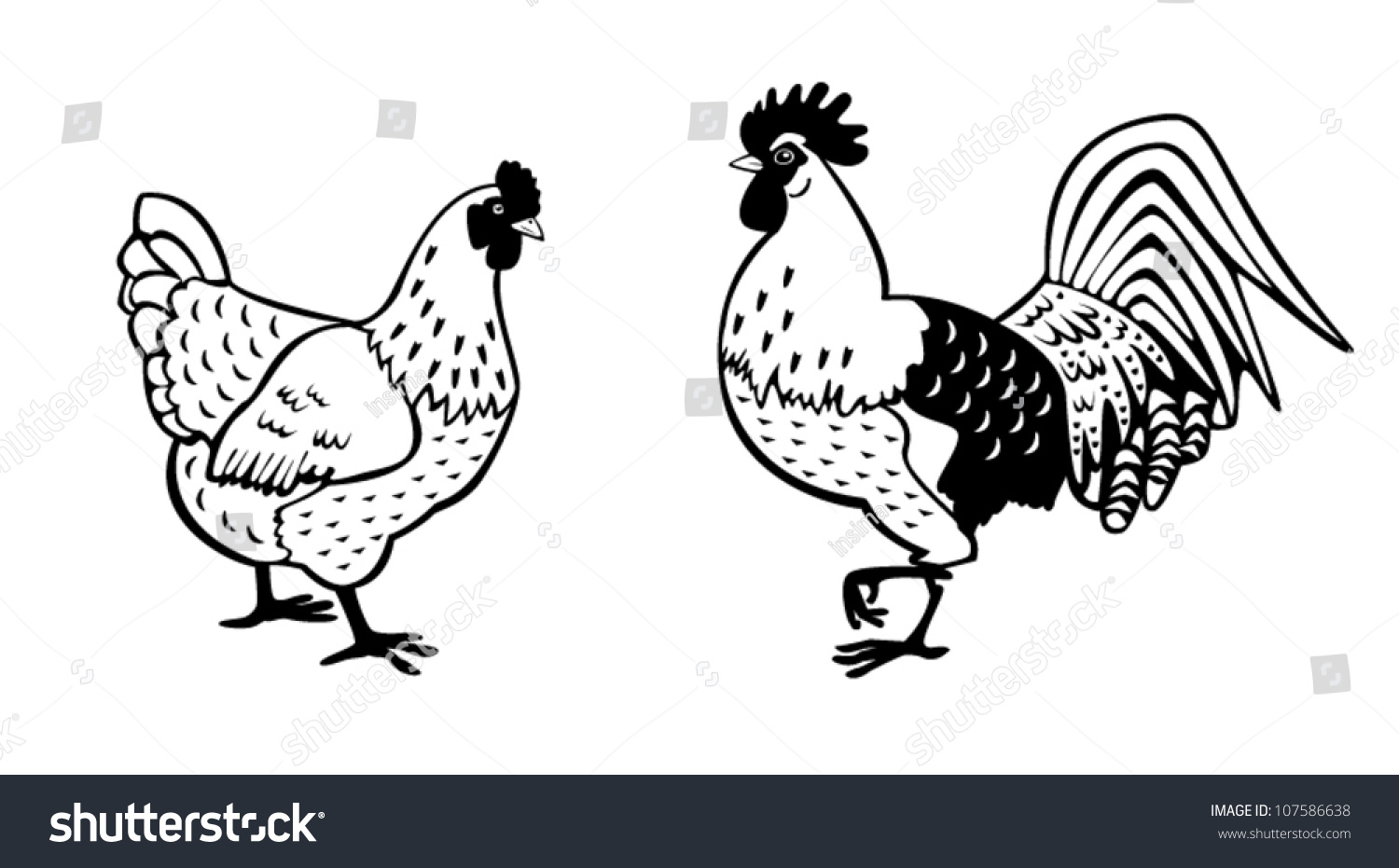 Chickenblack White Vector Picturestanding Rooster Hen