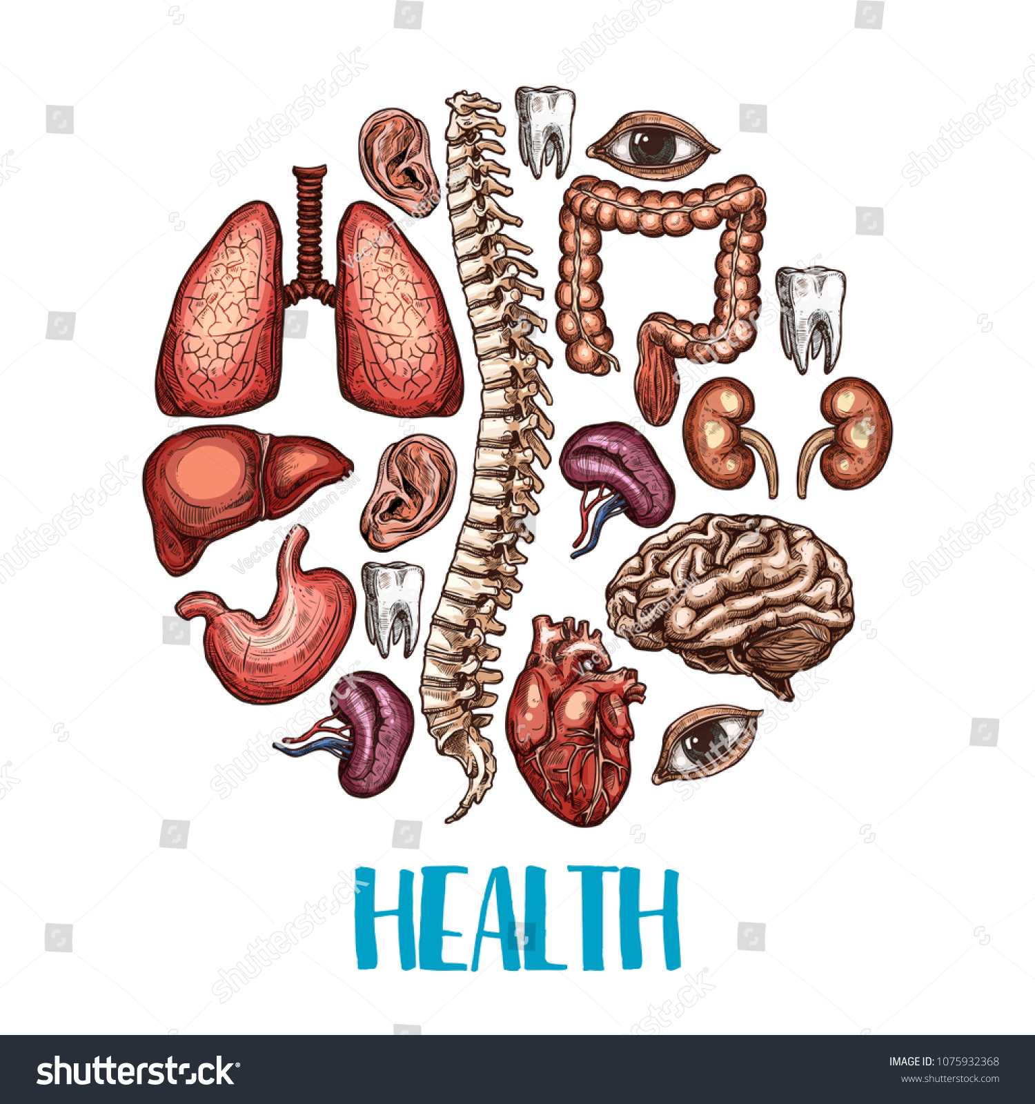 Health Poster Human Body Organs Vector Stock Vector (Royalty Free ...