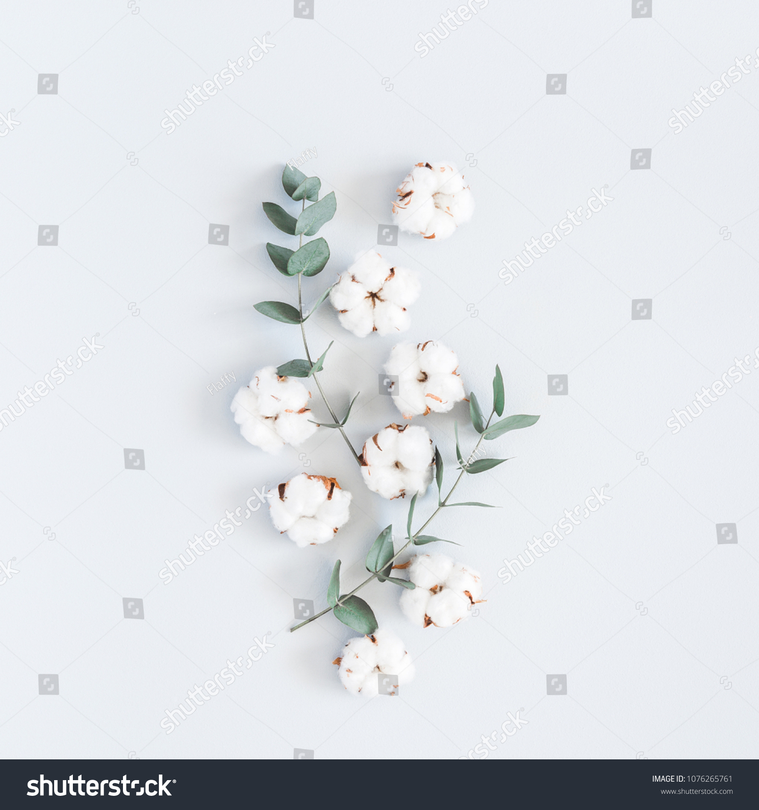Branche Fleur De Coton photo de stock de composition des fleurs. motif de fleurs