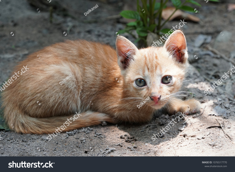 Kitty Cat Pussy