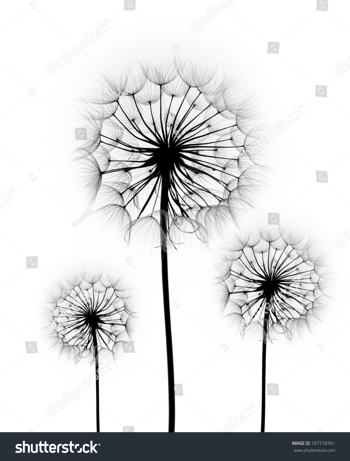 Dandelion flower on white background silhouette stock photo royalty dandelion flower on a white background silhouette mightylinksfo