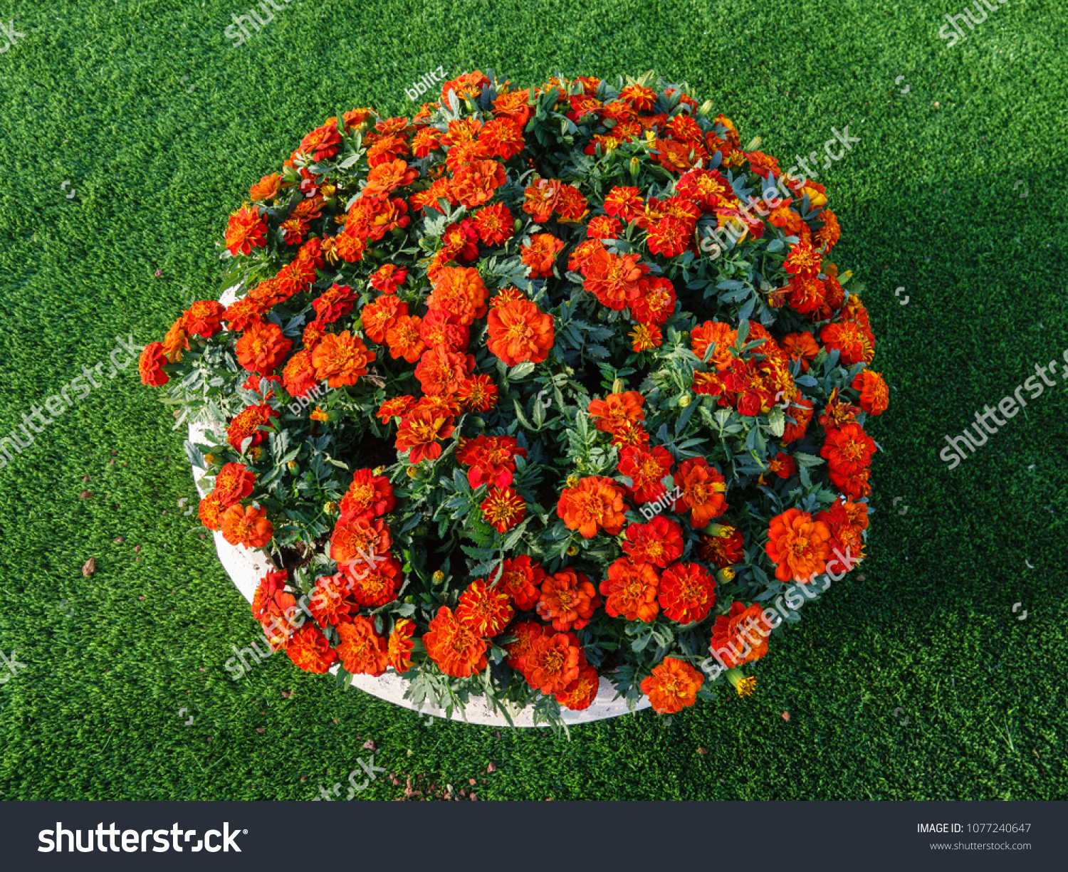 Rounded Flower Pot Various Flower Colors Stock Photo (Royalty Free ...