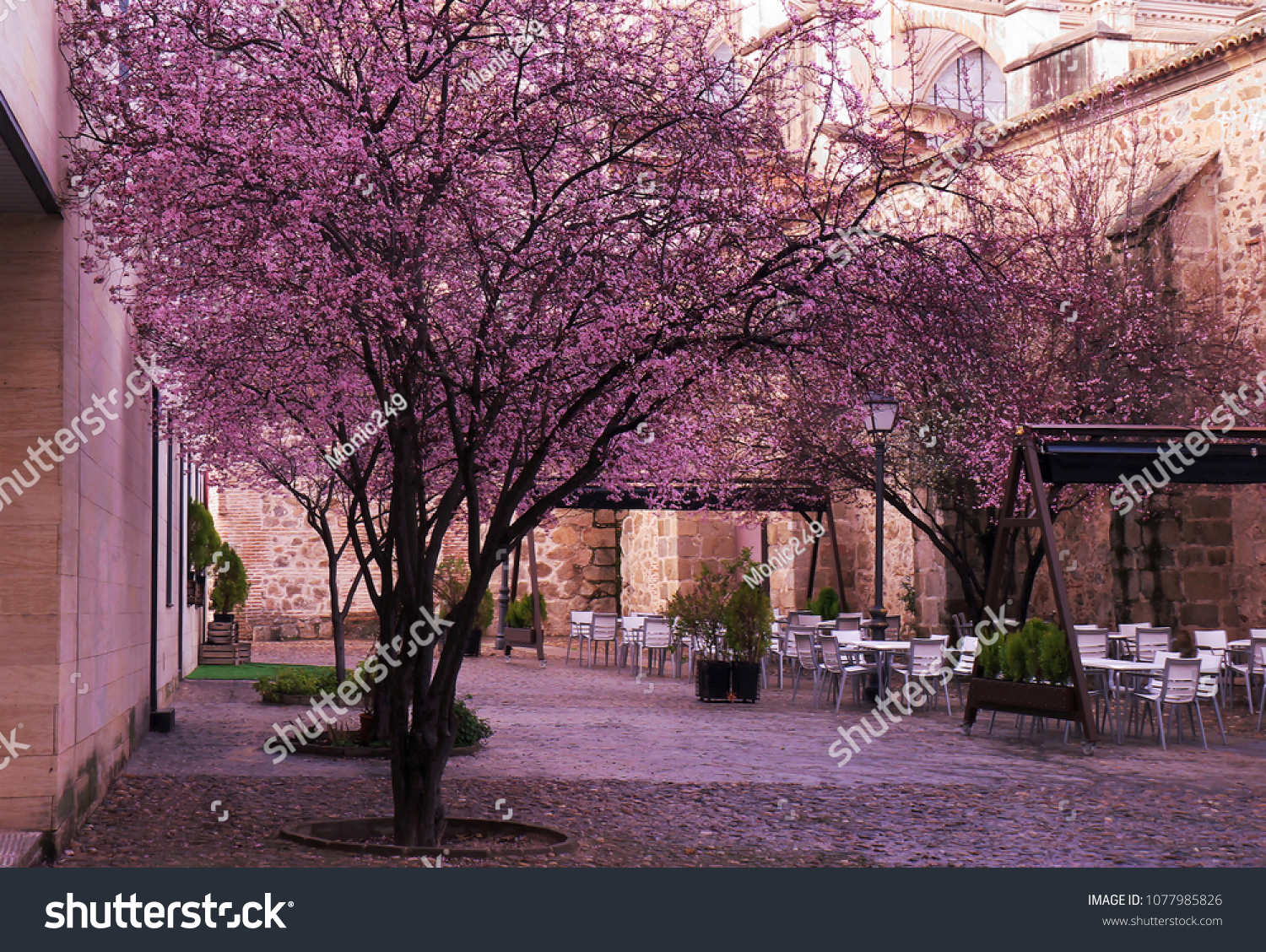Cherry Blossoms Flower Outdoor Restaurant Pink Stock Photo Edit Now