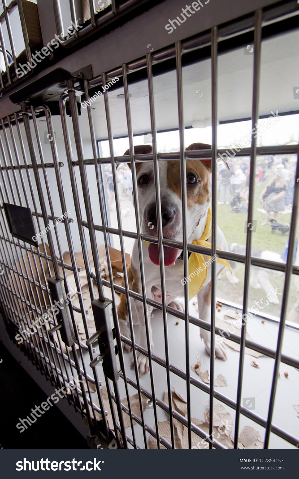 RIDGEFIELD PK NJJULY 14 Dog Adoption Stock Photo (Edit Now