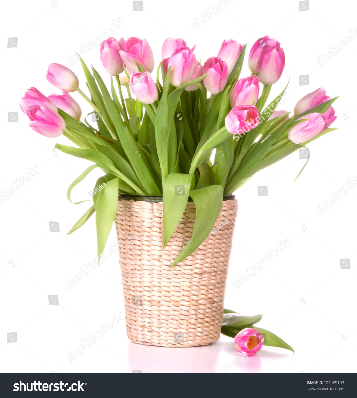 Pink tulips bouquet vase isolated on stock photo 107929193 pink tulips bouquet in vase isolated on white background reviewsmspy