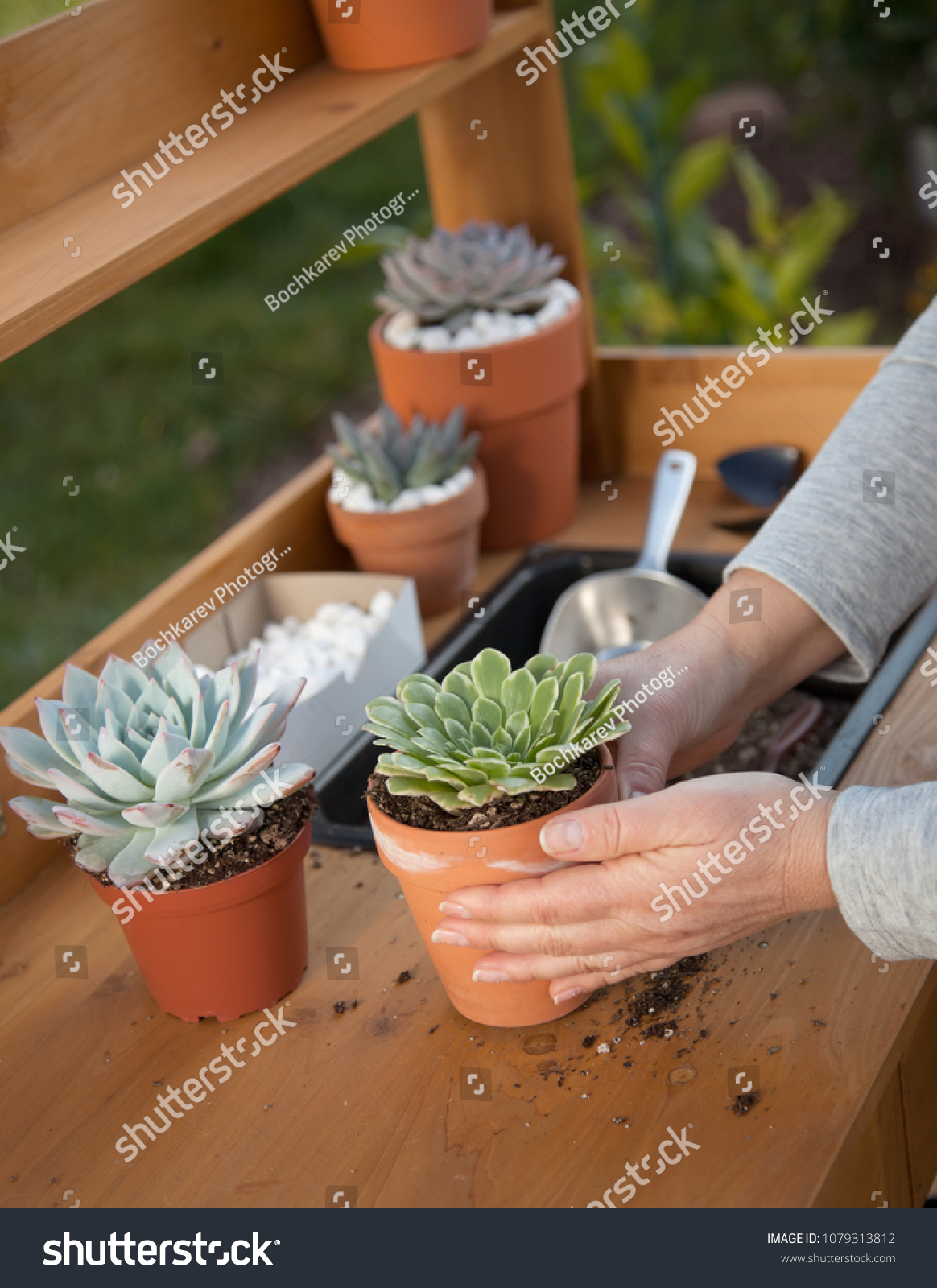 Decorating Clay Pots Succulent Plants Marble Stock Photo ...