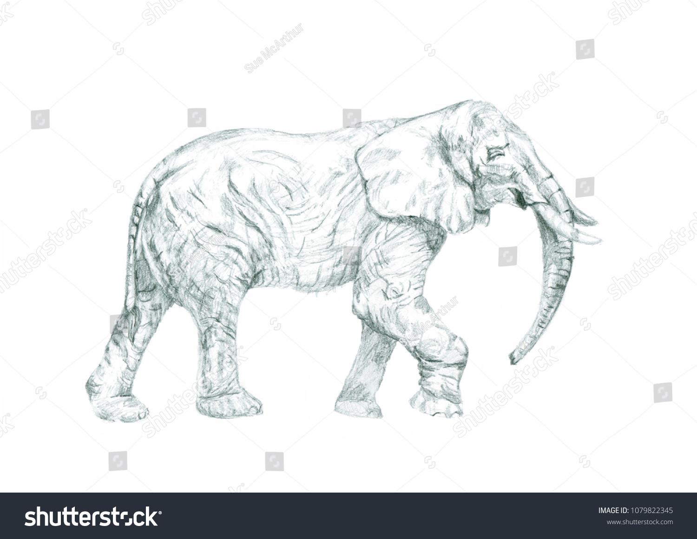 Elephant pencil drawing art sketch animal wild animal