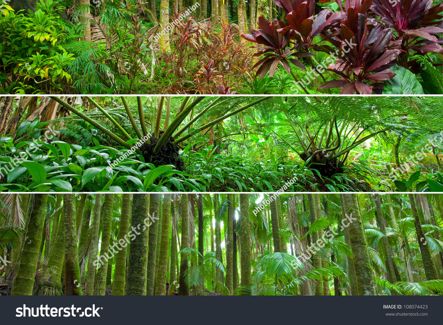 different types of tropical rain forest Pictures of tropical rainforest plants, including the amazon rainforest plants in the tropical rainforest that are grown as house plants discover different types of tropical plants.