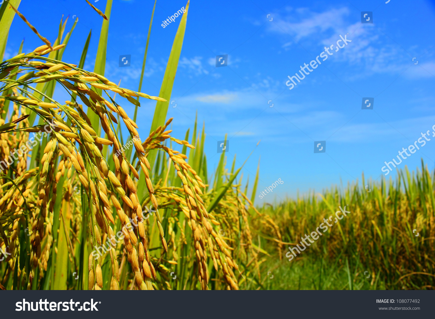 thesis on pesticide Problems with use of pesticides an environmental sciences essay for the good of the pest control is required the published on the uk essays website then.