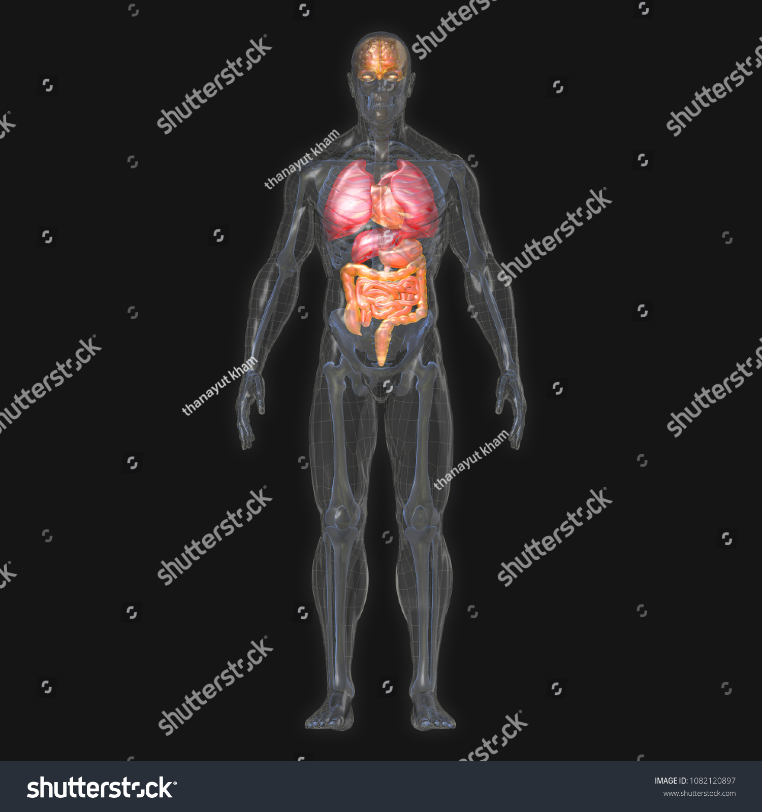 3 D Rendering Conceptual Human Organs Muscle Stock Illustration ...