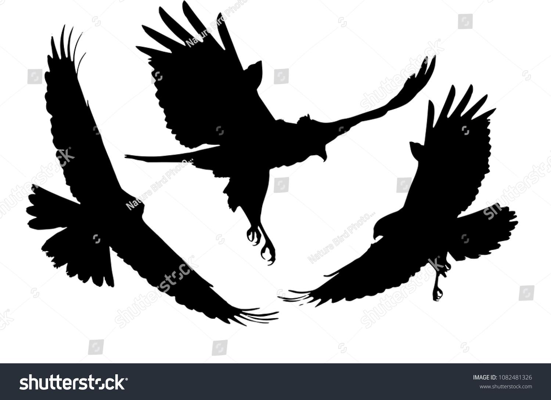 Flying Birds Bird Prey Vector Images Stock Vector Royalty Free 1082481326