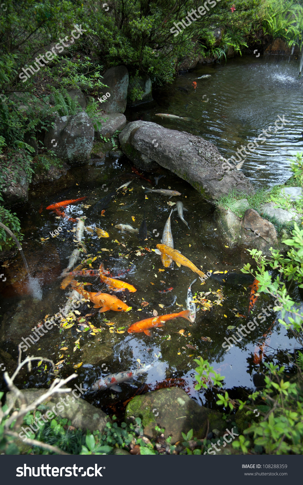 Gold fish pond japanese house garden stock photo 108288359 for Your pond japan