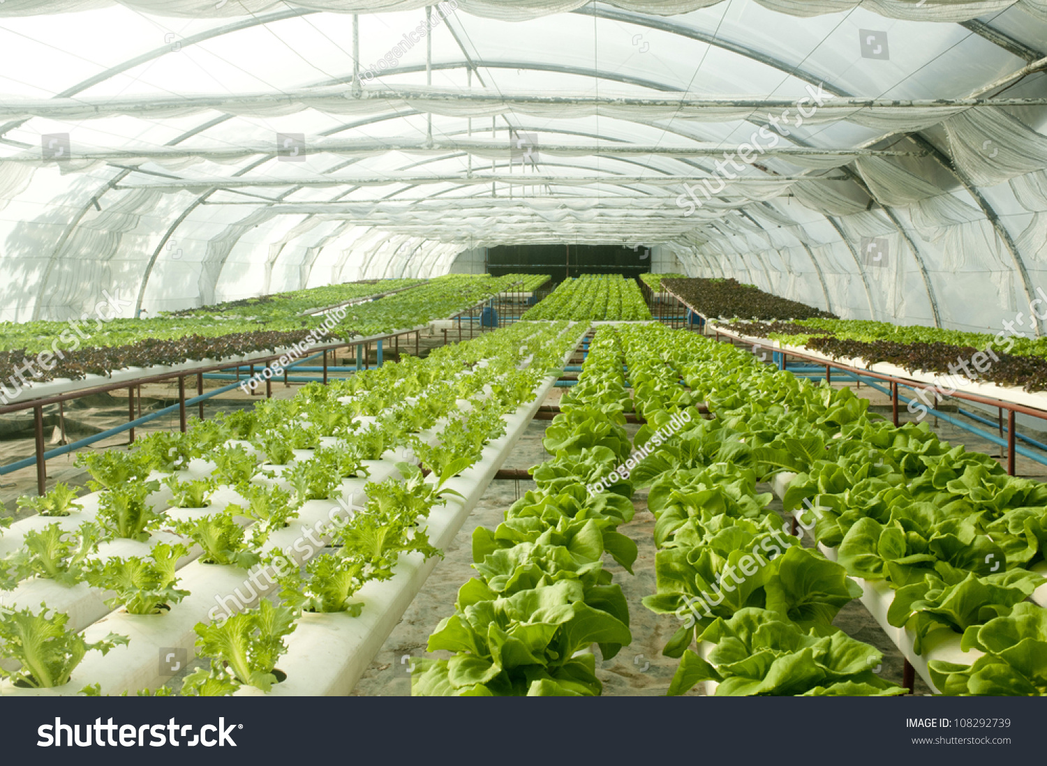 Organski hydroponic povrtnjak stock photo 108292739, Organska Hydroponic Povrća Vrt Stock Photo 108292739