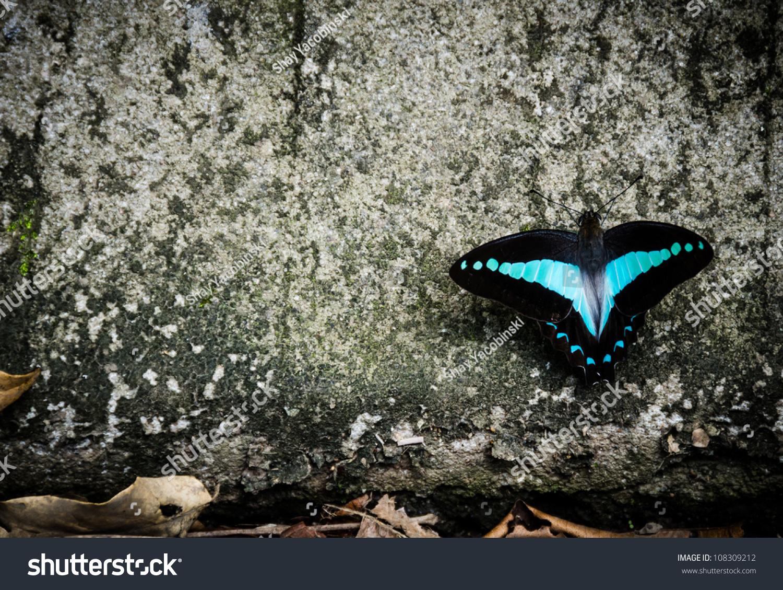 Tiffany TF4121B 80559S BlackBlue TF4121B Butterfly