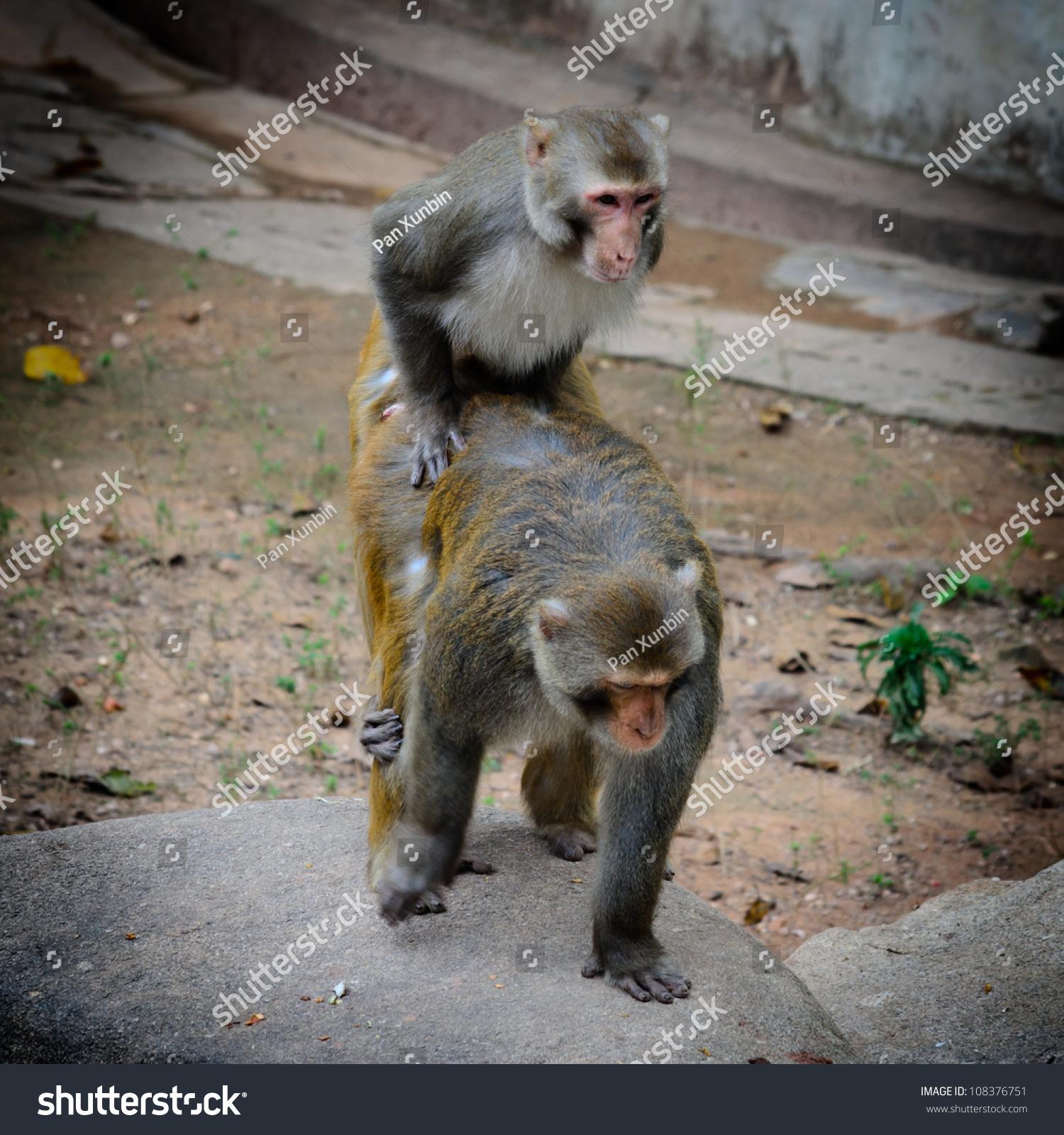 Секс с бабуином 13 фотография