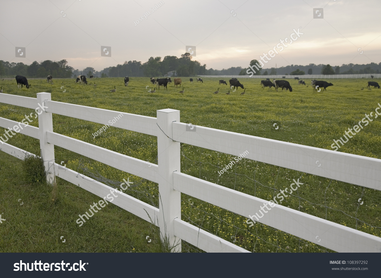 White Farm Fence