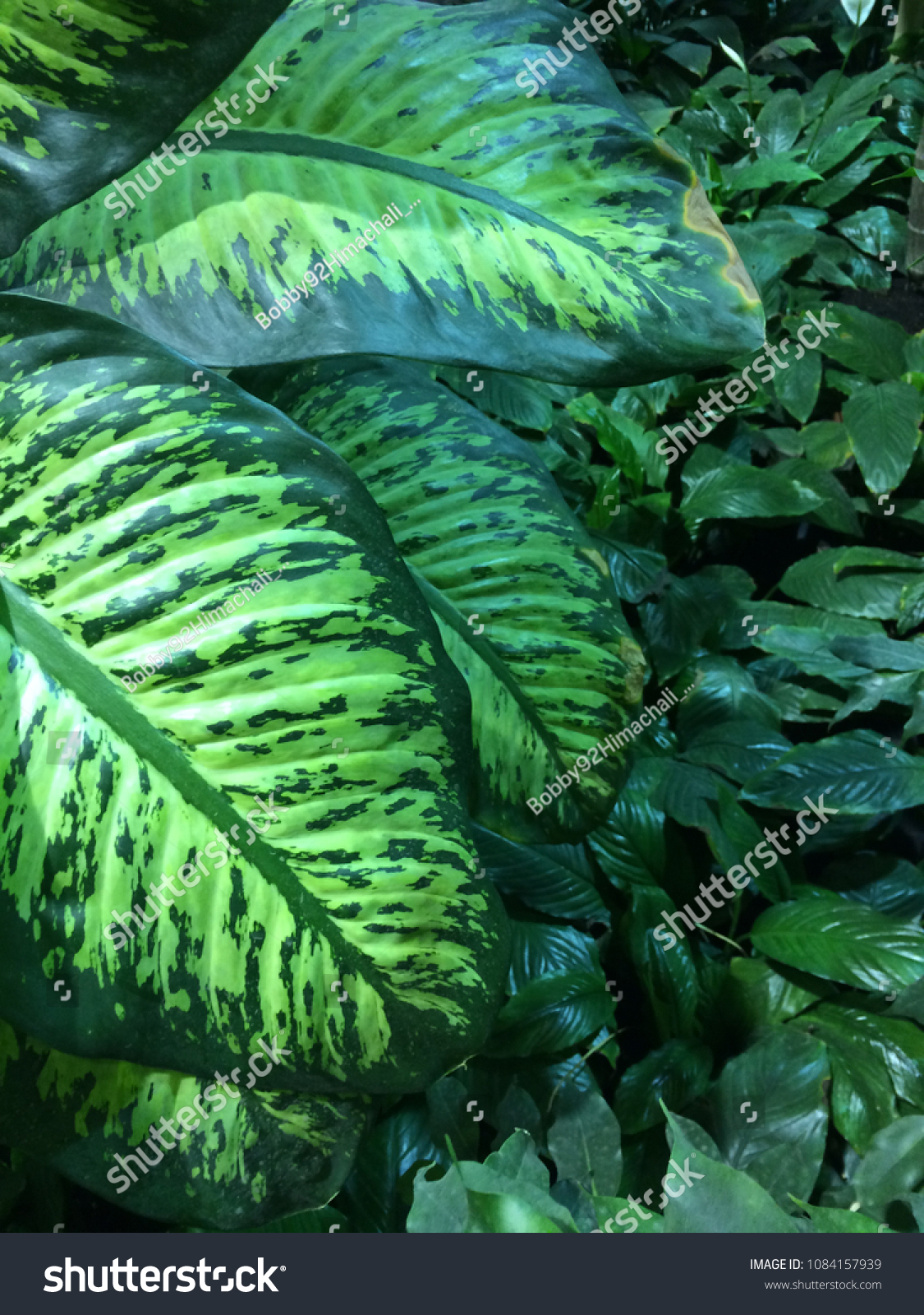 Leaves Background Beautiful Natural Shining Leaves Stock Photo Edit