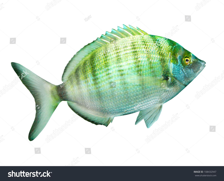 Mediterranean Fish Related Keywords
