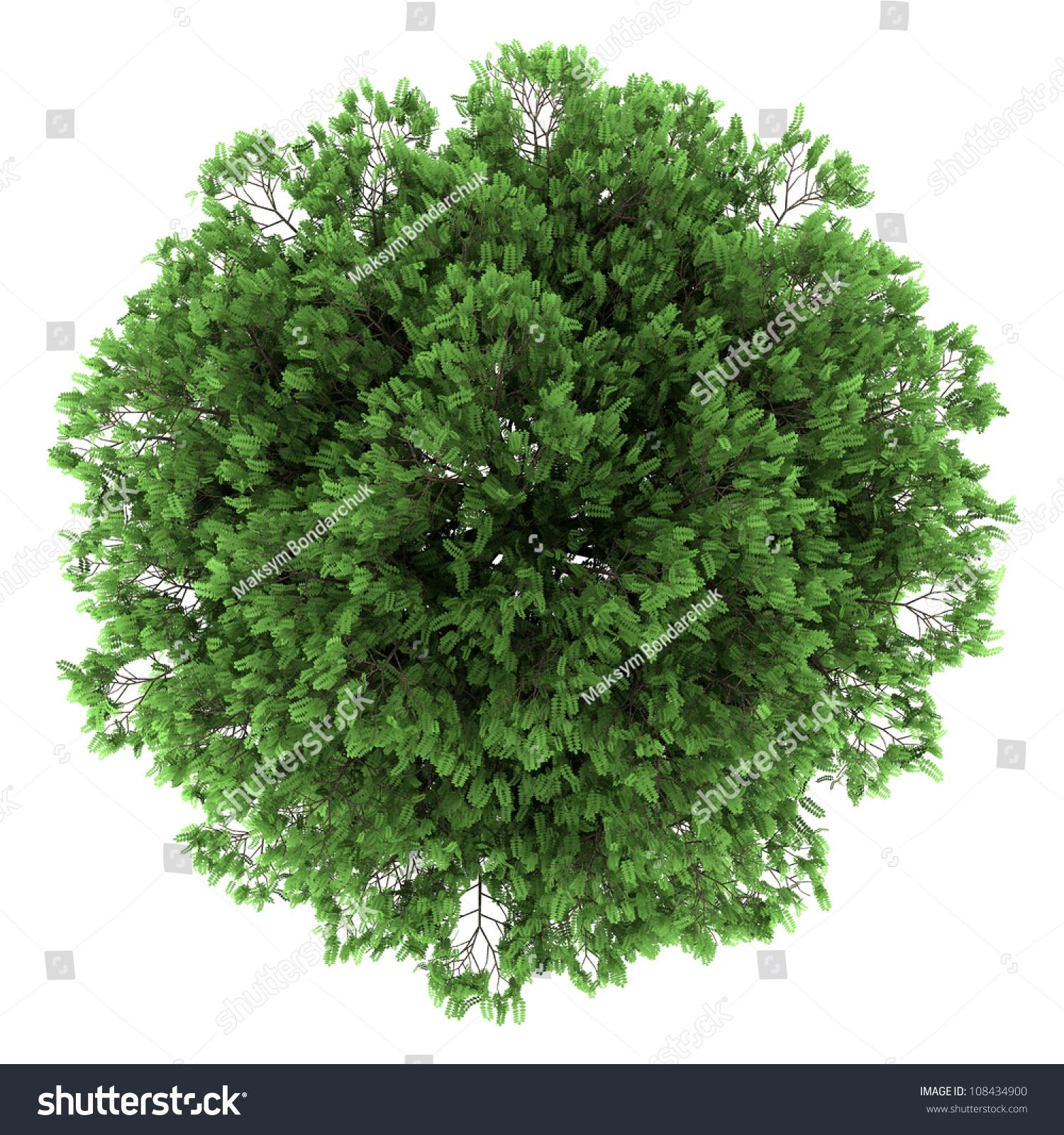 top pin tree of - photo #6