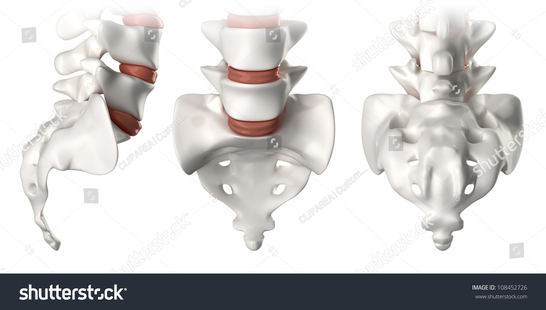 Spine Anatomy Sacral Region Lateral Anterior Stock Illustration
