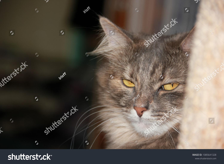 Gray fluffy cat, look askance