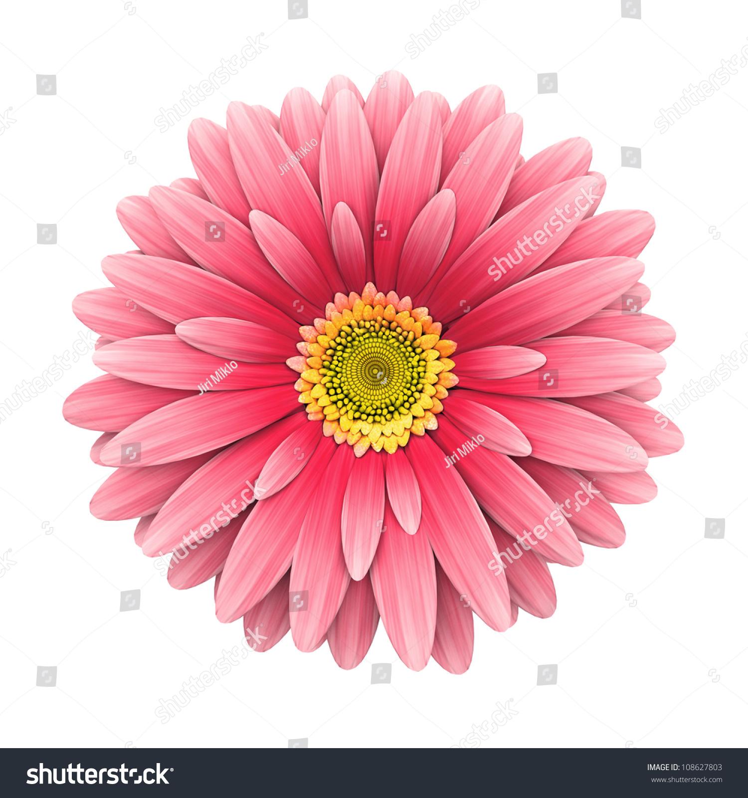 Pink Flowers White Background 325450 Spojivachfo