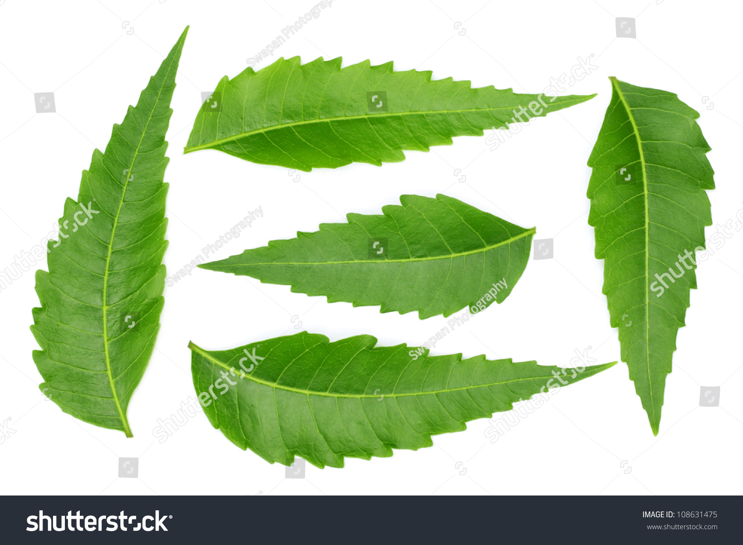 Neem Leaves In English