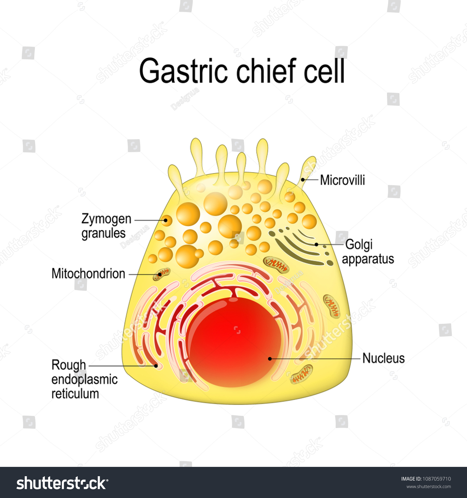 chief cell diagram wiring diagram third level
