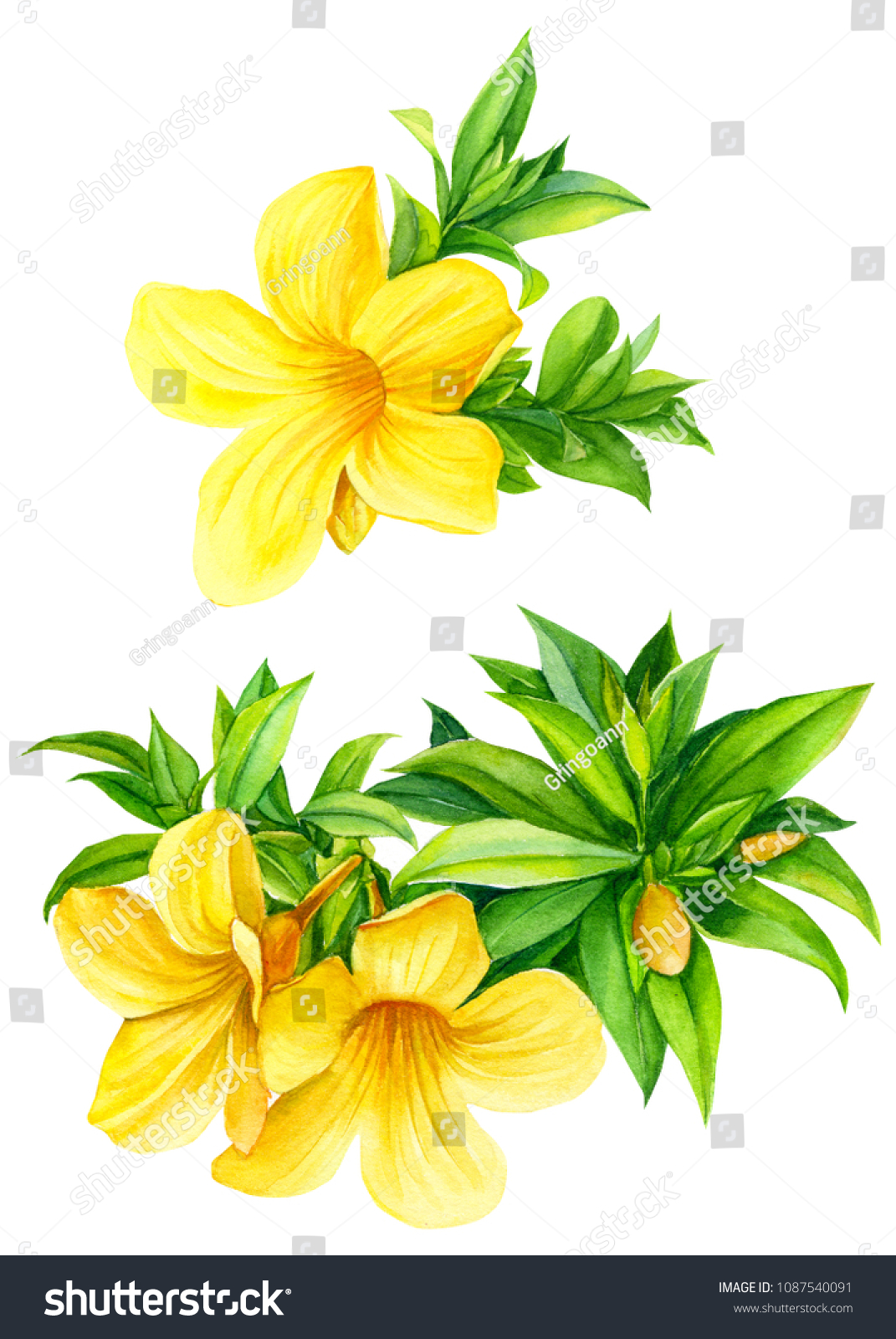 Yellow Tropical Flowers On Isolated White Stock Illustration