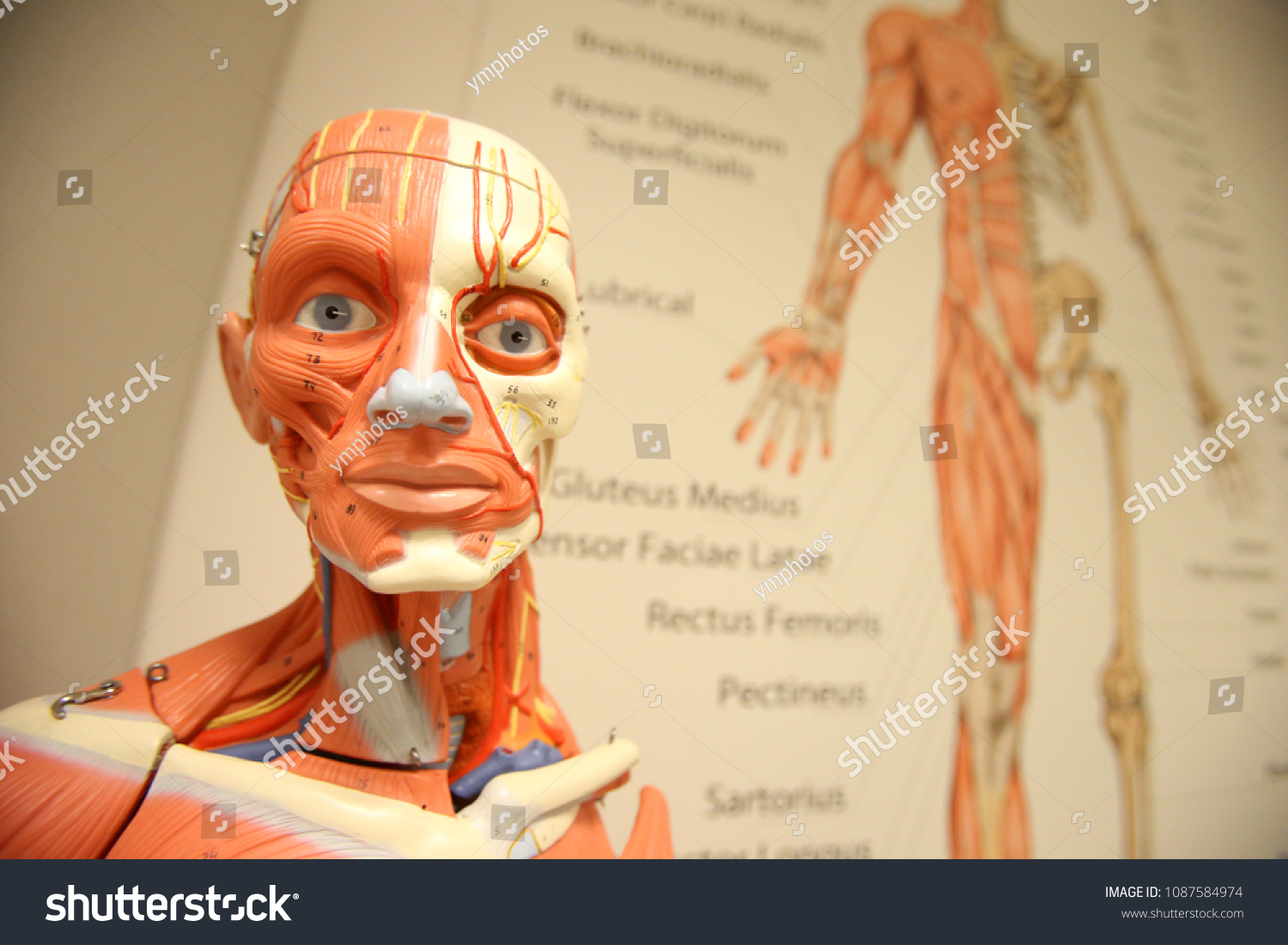 Anatomy Branch Biology Concerned Study Structure Stock Photo (Edit ...