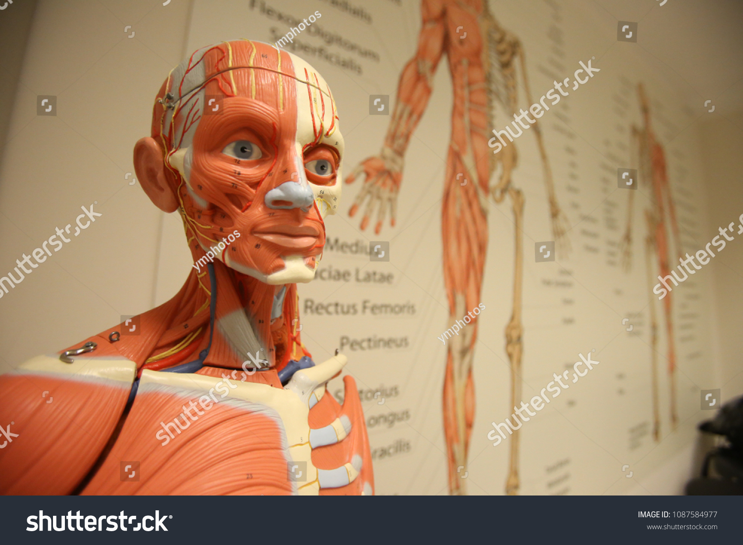 Anatomy Branch Biology Concerned Study Structure Stock Photo ...