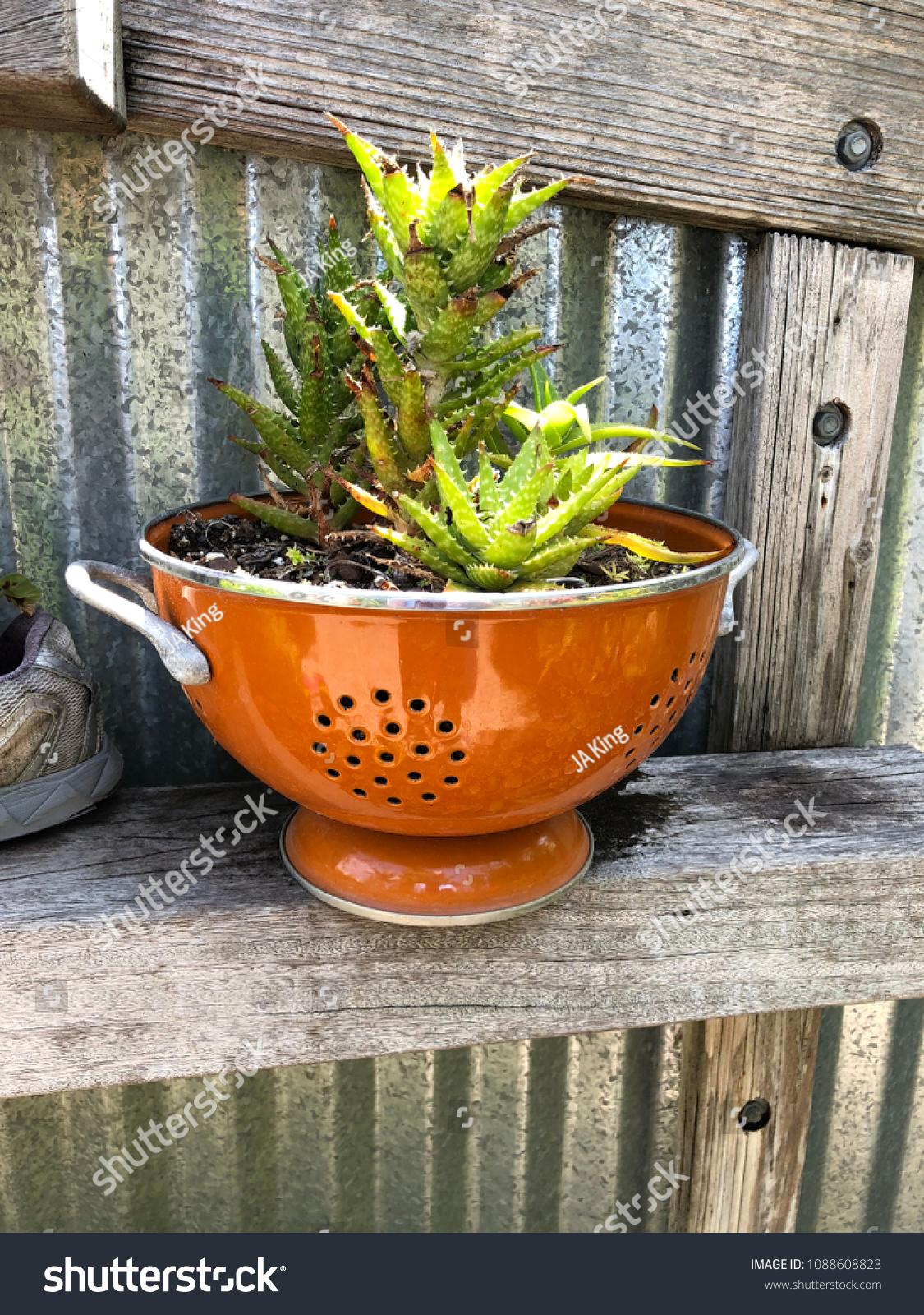 Creative Succulent Planter Stock Photo Edit Now 1088608823
