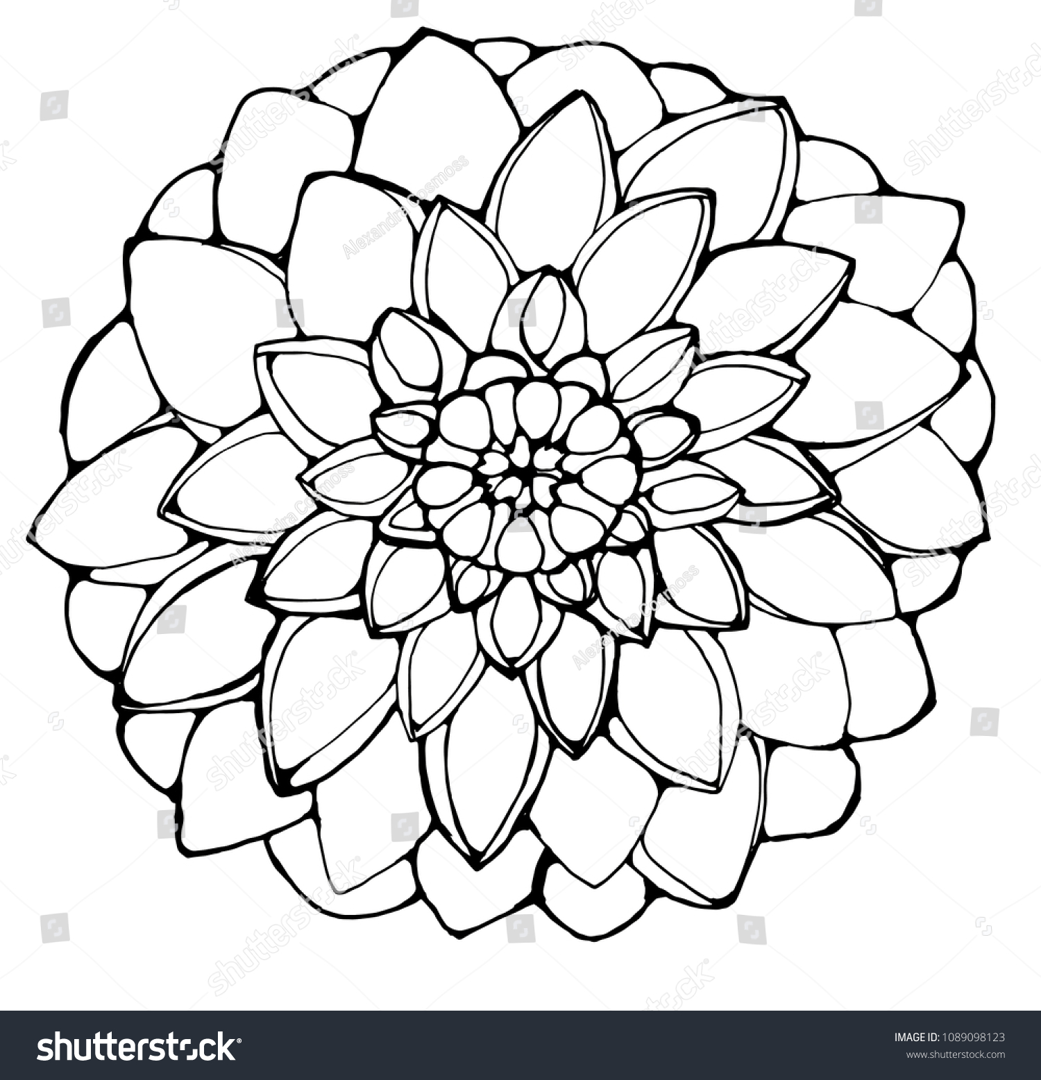 Black White Picture Dahlia Flower Good Stock Vector Royalty Free
