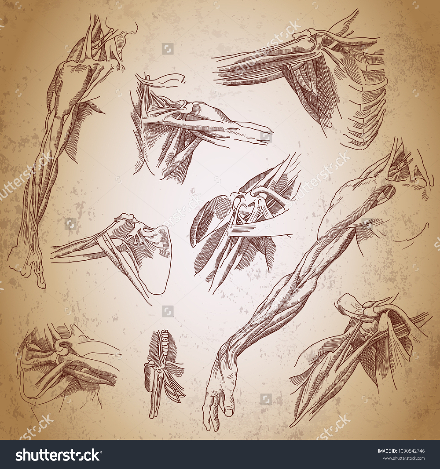 Leonardo Da Vinci Sketches Three Studies Stock Vector (Royalty Free ...