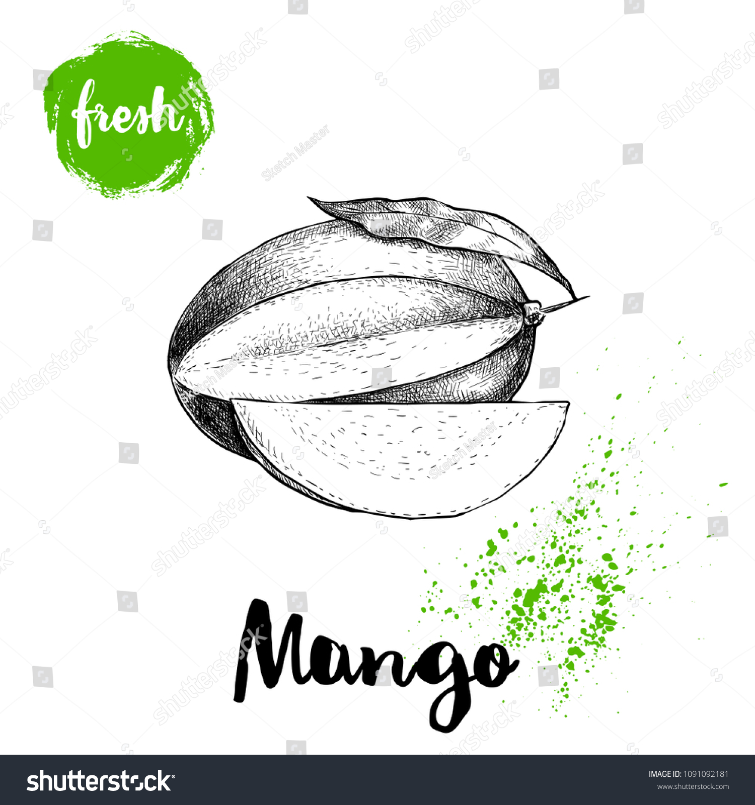 Mango fruit sketch style vector illustration hand drawn poster exotic fruit with leaf and