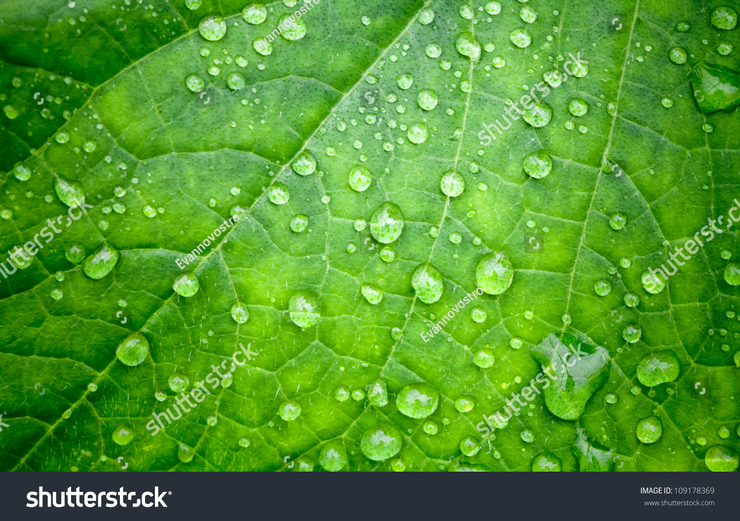 natural green background leaf drops water stock photo 109178369