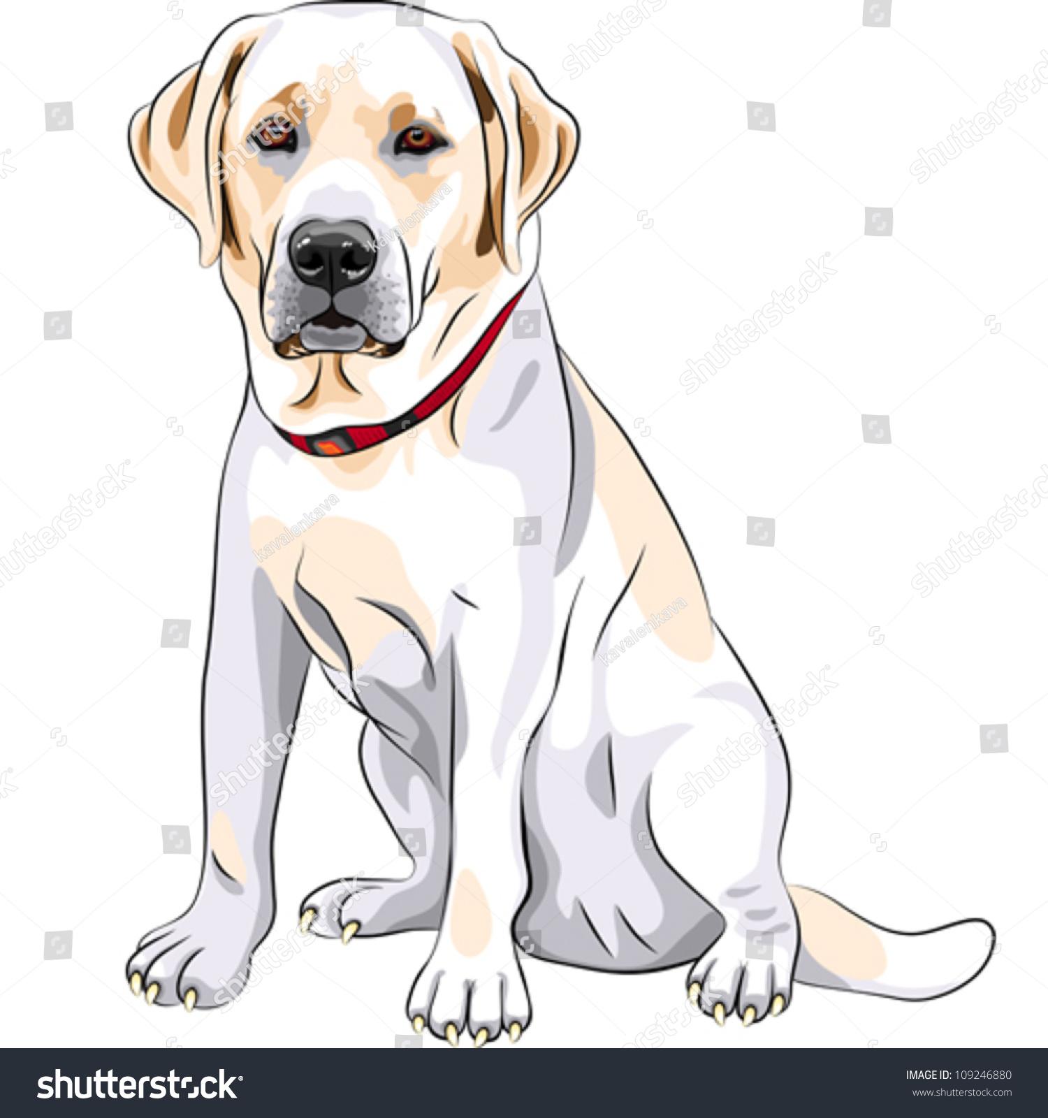 vector portrait closeup serious yellow dog stock vector 109246880