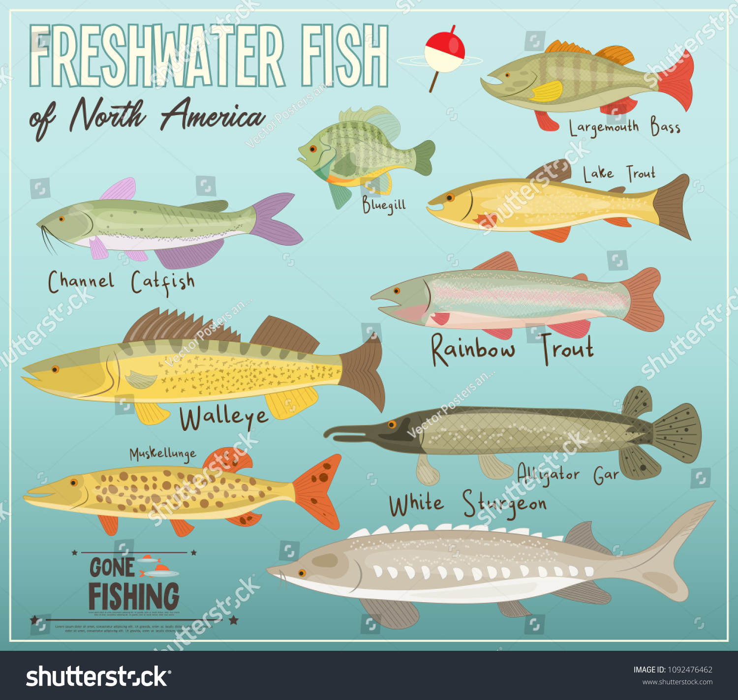 NORTH AMERICAN FISH ID CHART GLOSSY POSTER PICTURE PHOTO BANNER PRINT cool 5671