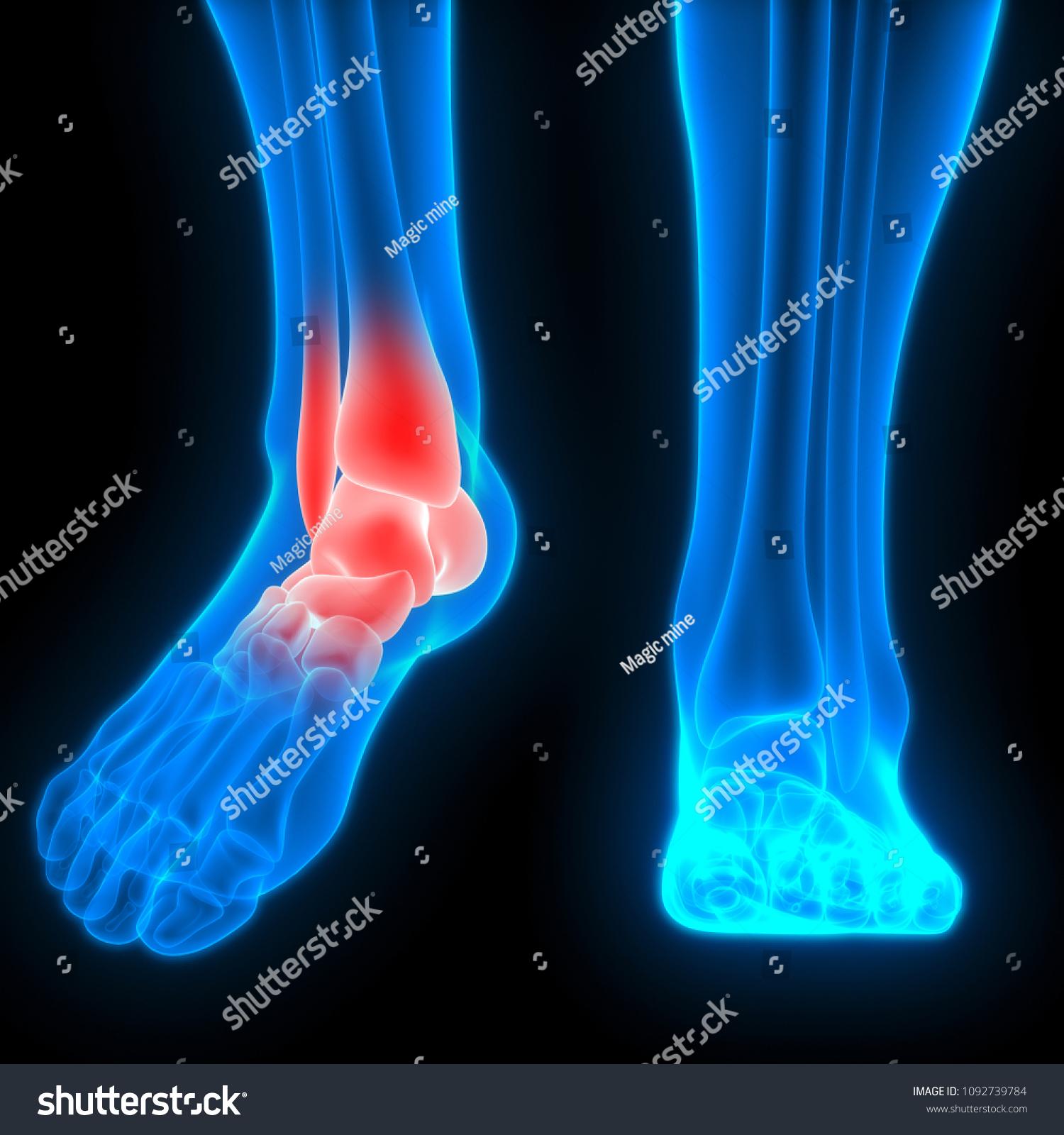 Human Skeleton System Ankle Bone Joint Stock Illustration Royalty