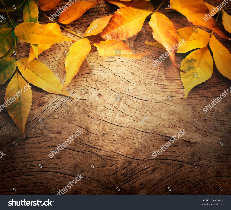 autumn fall tree backgrounds - photo #35