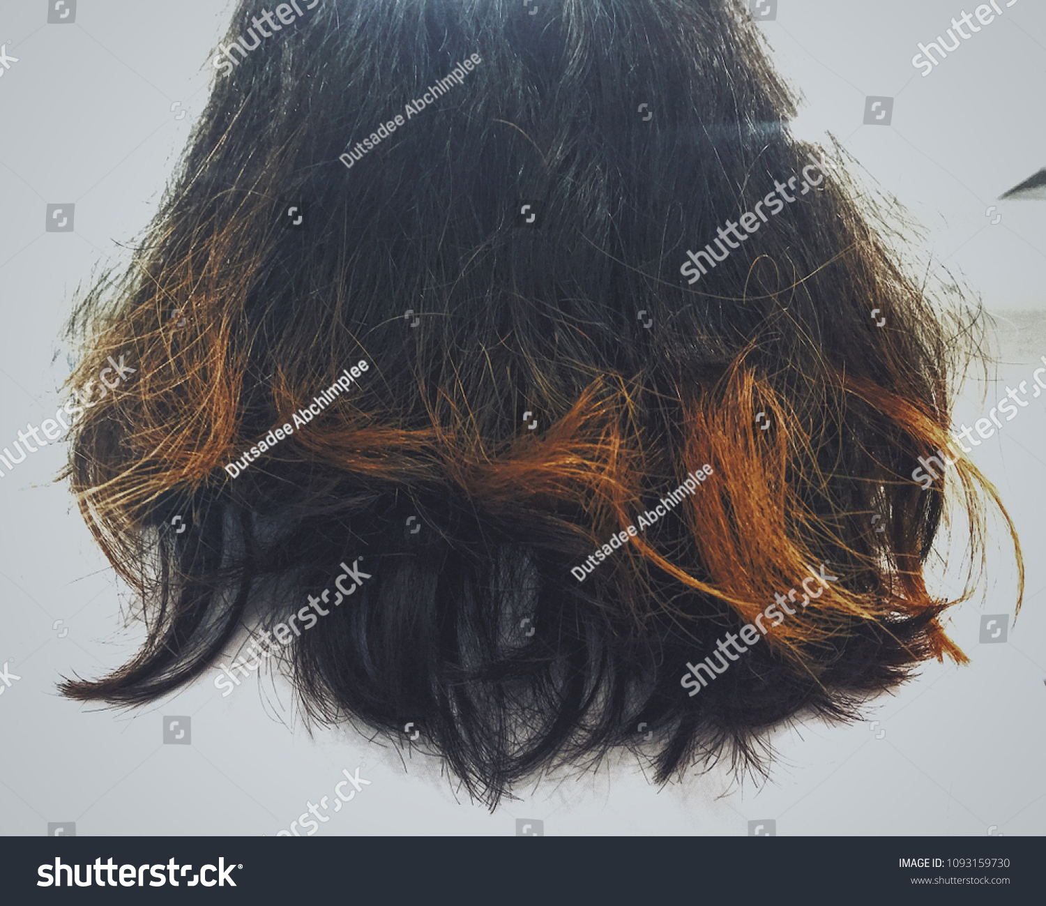Damaged Hair Hair Coloring On White Stock Photo (Edit Now ...
