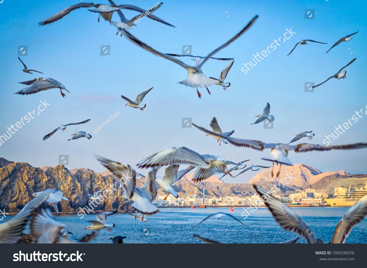 Flock of pigeons flying away to the sky with the background of Muscat skyline