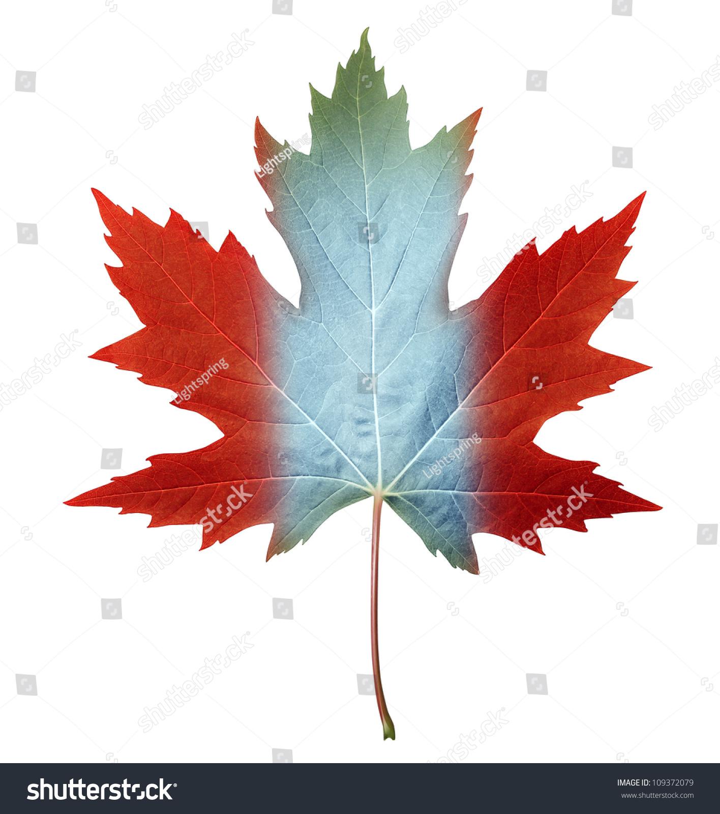 canada maple leaf canadian flag colors stock illustration