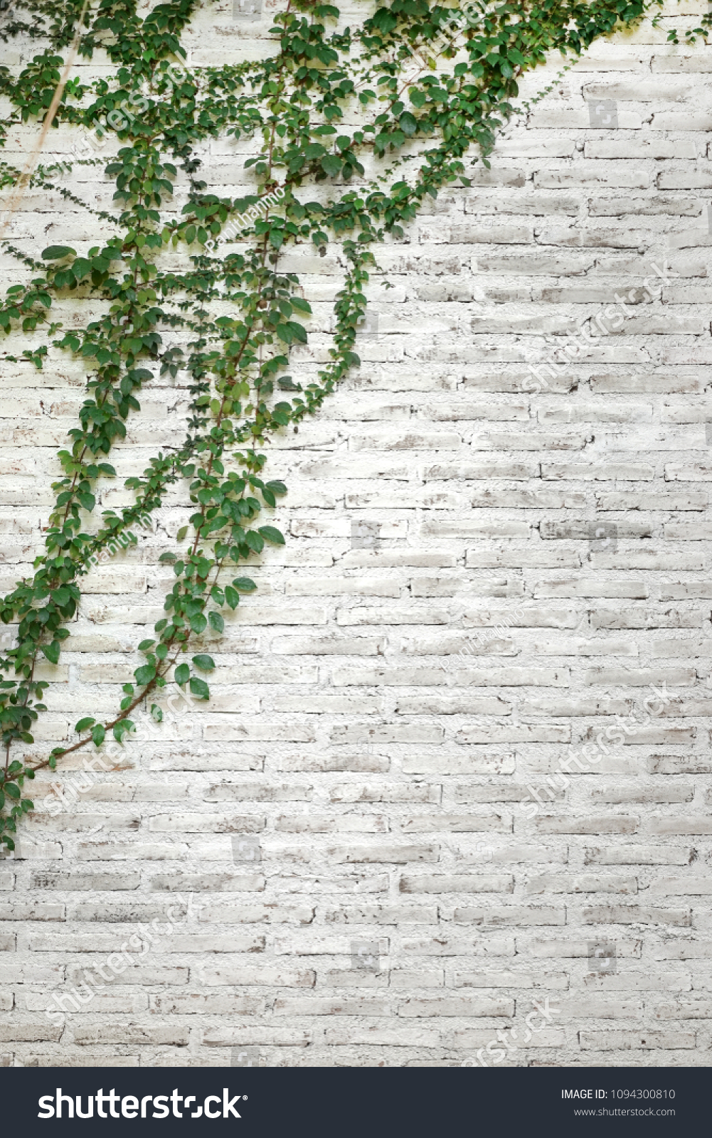 Green Plants On White Brick Wall Stock Photo Edit Now 1094300810