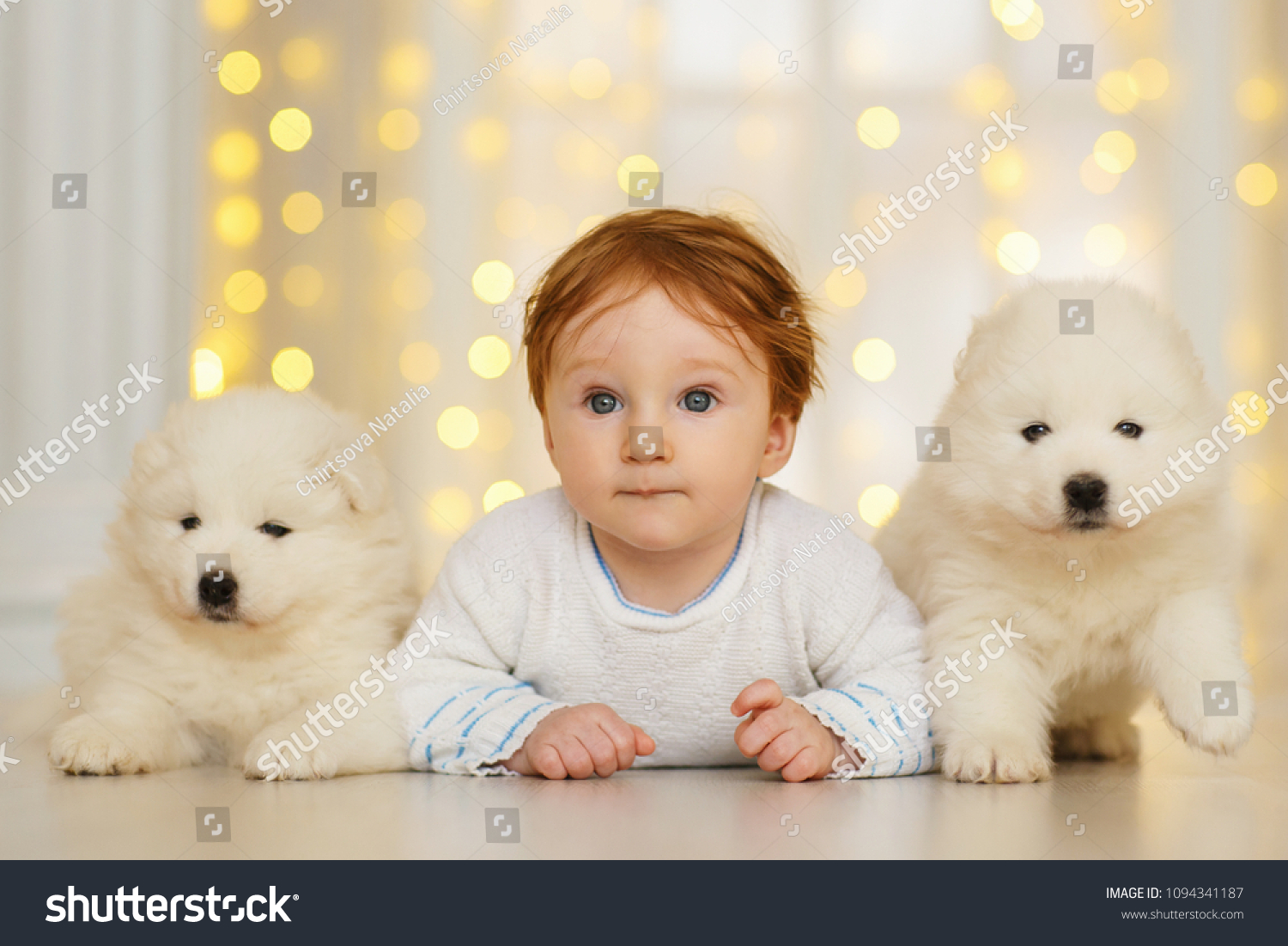 Baby Boy Two Samoyed Puppies Stock Photo Edit Now 1094341187